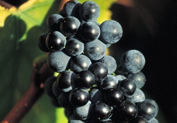 Inscripción abierta para productores de Río Negro