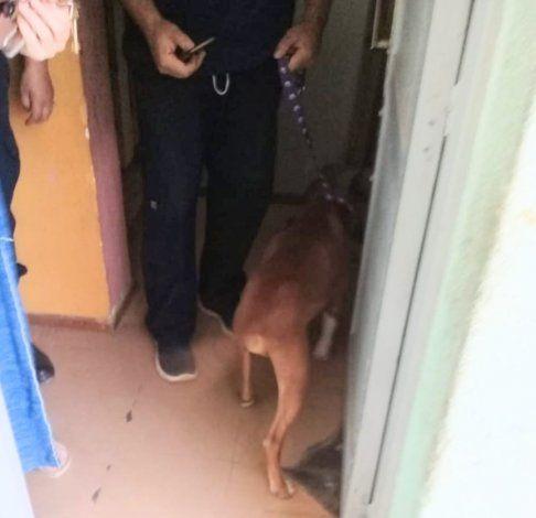 La Policía rescató a un perro desnutrido de un departamento
