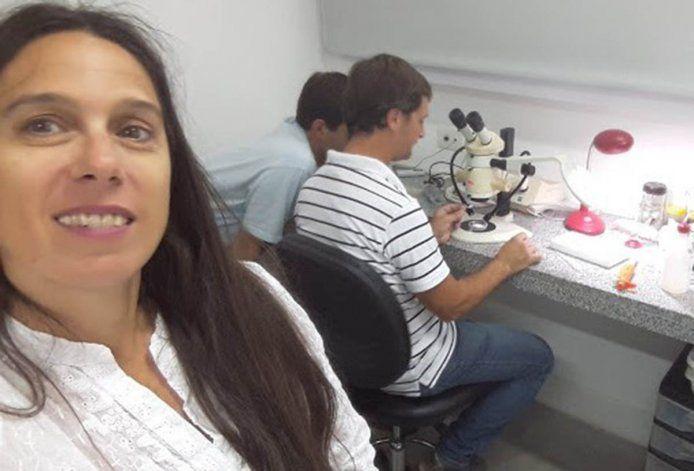 Descubren un nuevo caracol desnudo en el golfo San Matías