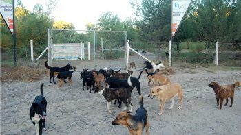 En el refugio canino de la Isla Jordán hay cientos de perros que necesitan más cuidado, alimentación y compromiso de la comunidad para adoptarlos.