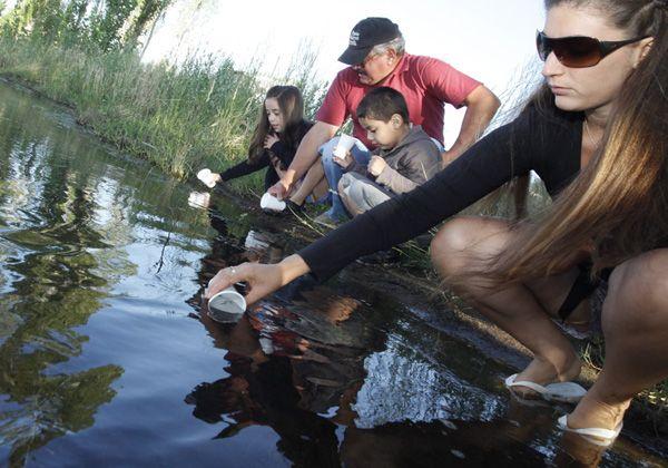 Sembraron alevinos de trucha en la Isla Jordán