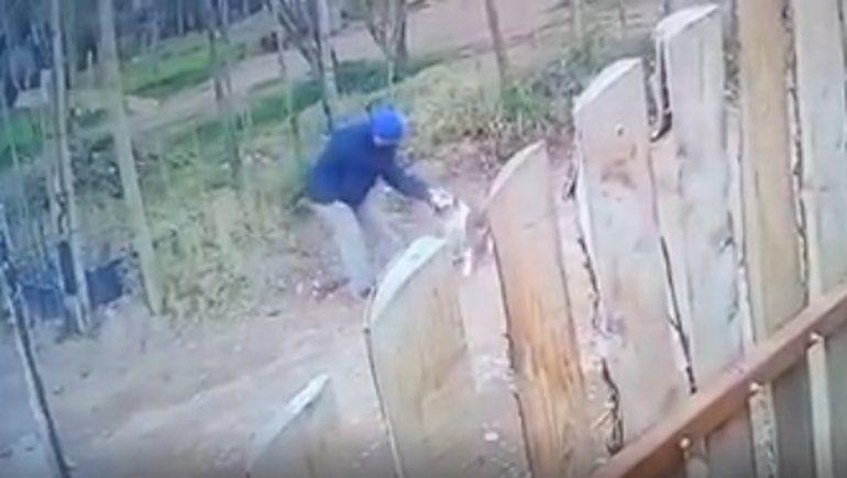 Horror en Centenario: ahorcó y mató a un perro a piedrazos