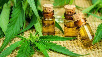 otra vez roban plantas de cannabis medicinal para tratamientos