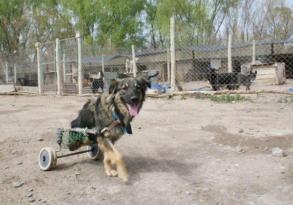 Harán cumplir la ordenanza sobre mascotas