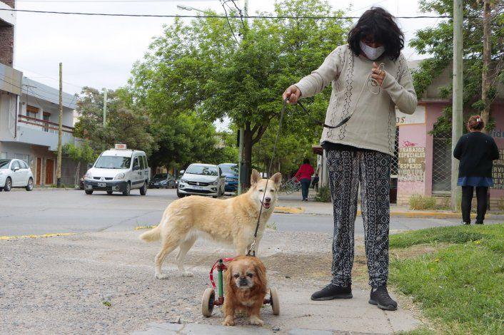 Toto, el perro que salvó la vida de Isabel