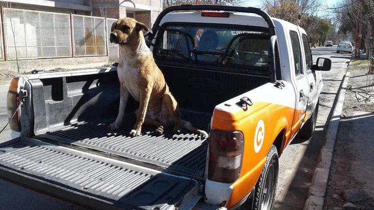 Rescataron a un perro que cayó al canal y le dieron refugio