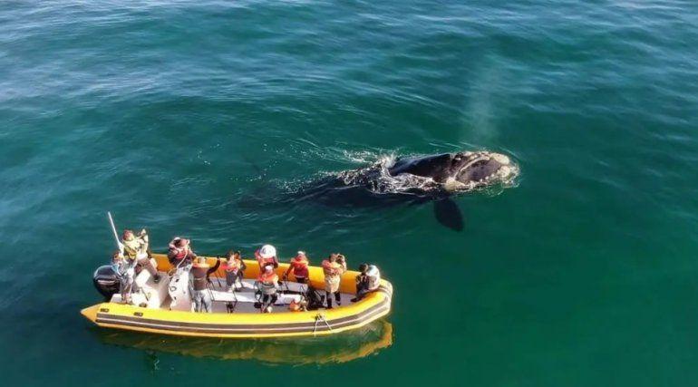Avistaje de fauna marina: un mundo por descubrir