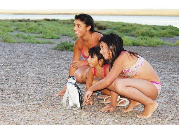 Apareció un pequeño pingüino en una playa de San Antonio